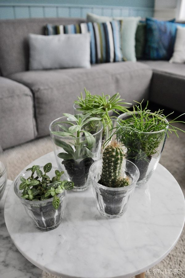 Urban Jungle Bloggers : Plants and Glass : Planten en Glas : STIJLIDEE ...